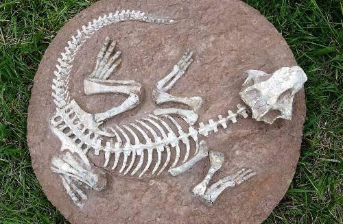 美国发现一批恐龙化石