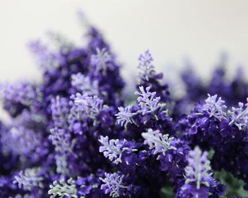 薰衣草的花语是什么 薰衣草花语大全及传说