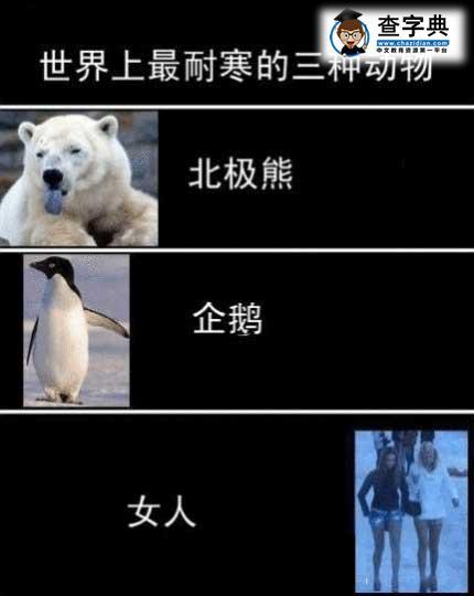 最耐寒的动物_残杀野生动物
